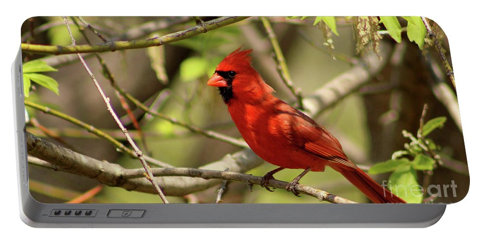 Bird Portable Battery Charger featuring the photograph Cardinal by Douglas Milligan