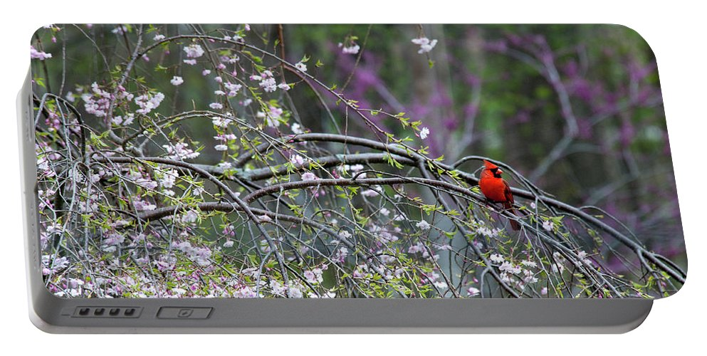 Bird Portable Battery Charger featuring the photograph Cardinal In Flowering Tree by David Arment
