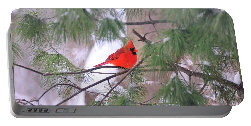Red Bird Portable Battery Charger featuring the photograph Cardinal In Winter by David Arment