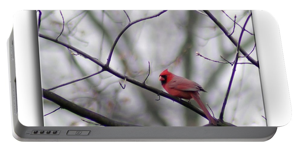 2d Portable Battery Charger featuring the photograph Cardinal Perched On A Branch by Brian Wallace