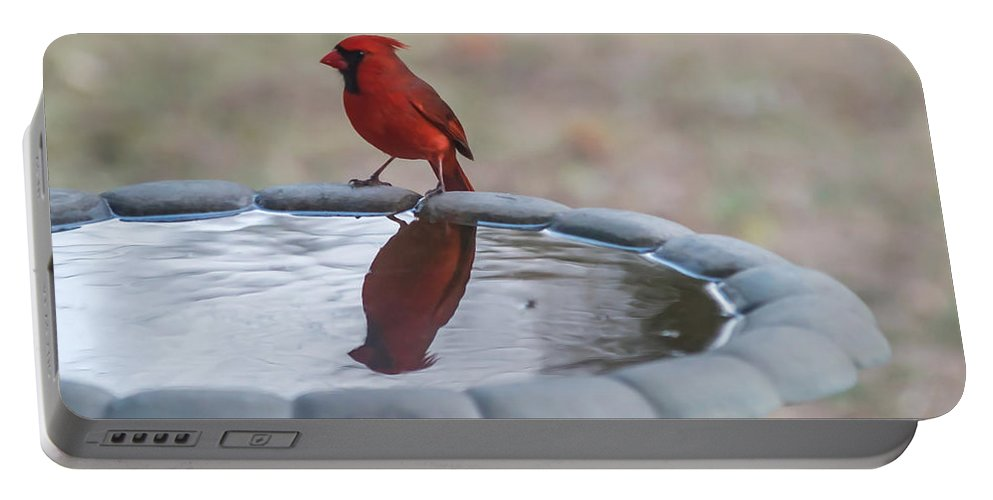 Terry Deluco Portable Battery Charger featuring the photograph Cardinal Reflection by Terry DeLuco