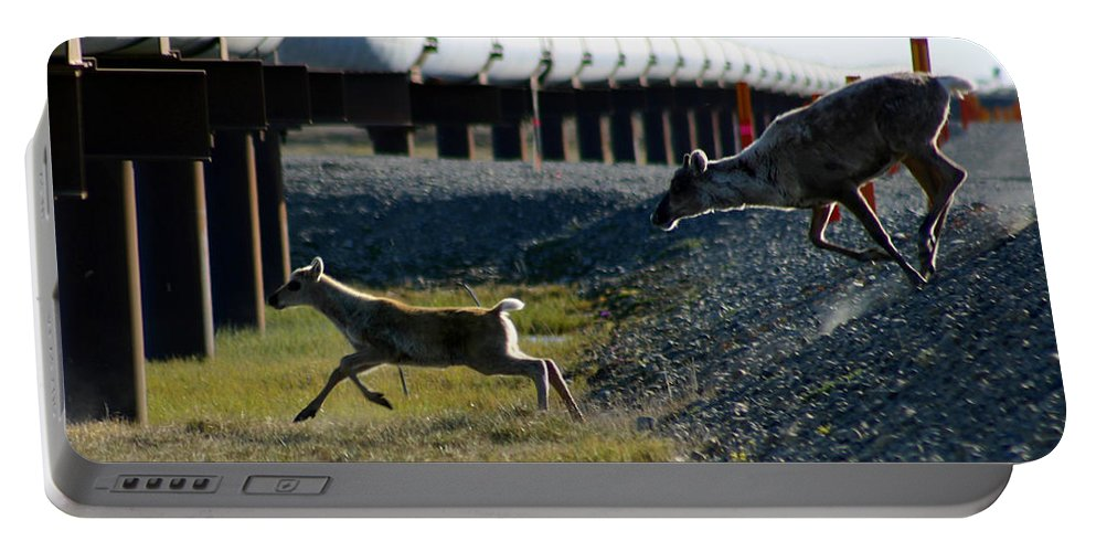 Caribou Portable Battery Charger featuring the photograph Caribou Cow And Fawn by Anthony Jones