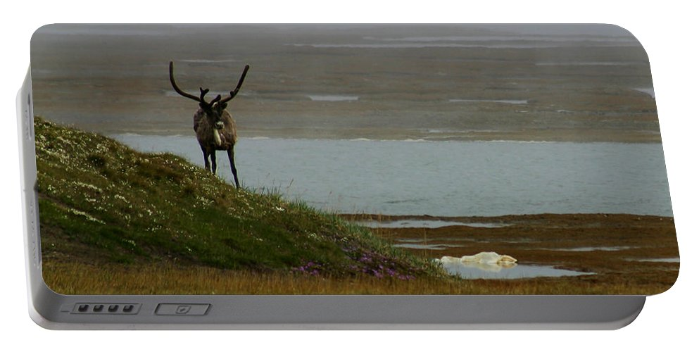 Caribou Portable Battery Charger featuring the photograph Caribou Fog by Anthony Jones