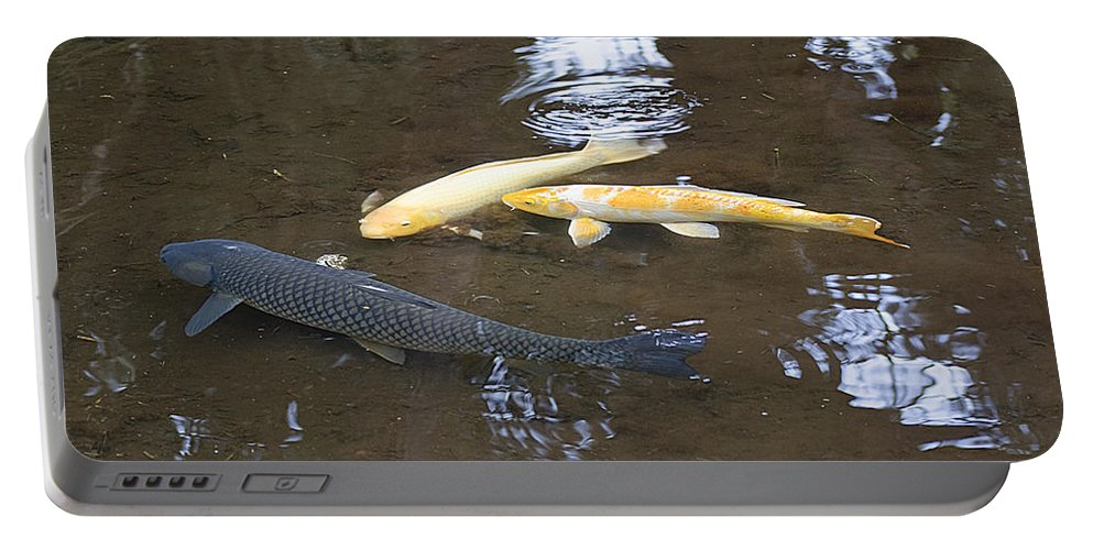 Koi Portable Battery Charger featuring the photograph Carp by Kenneth Albin