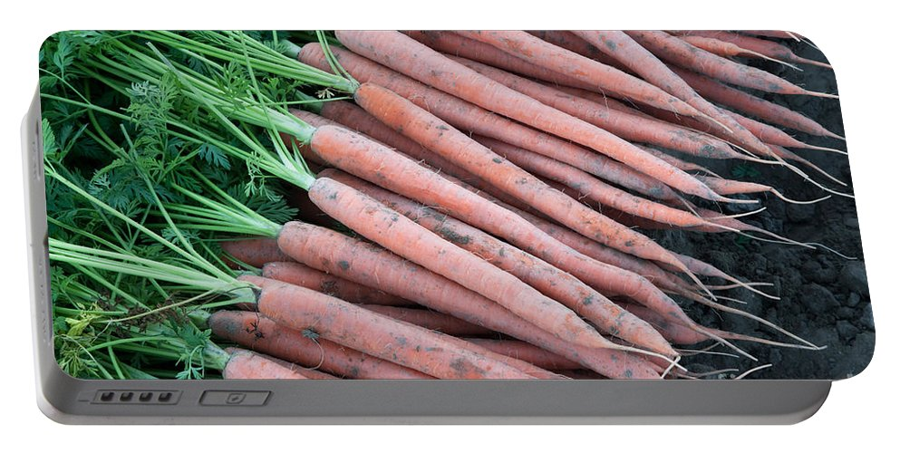 Carrots Portable Battery Charger featuring the photograph Carrots, Harvest by Inga Spence