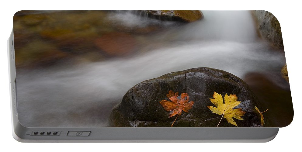 Leaves Portable Battery Charger featuring the photograph Castaways by Mike Dawson