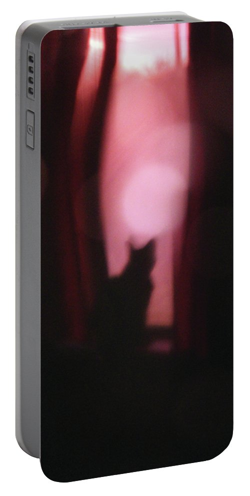 Felis Catus Portable Battery Charger featuring the photograph Cat In The Window by Alycia Christine