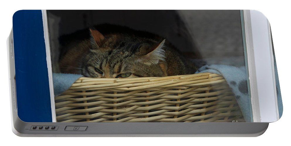 Cat Portable Battery Charger featuring the photograph Cat In The Window by Louise Heusinkveld