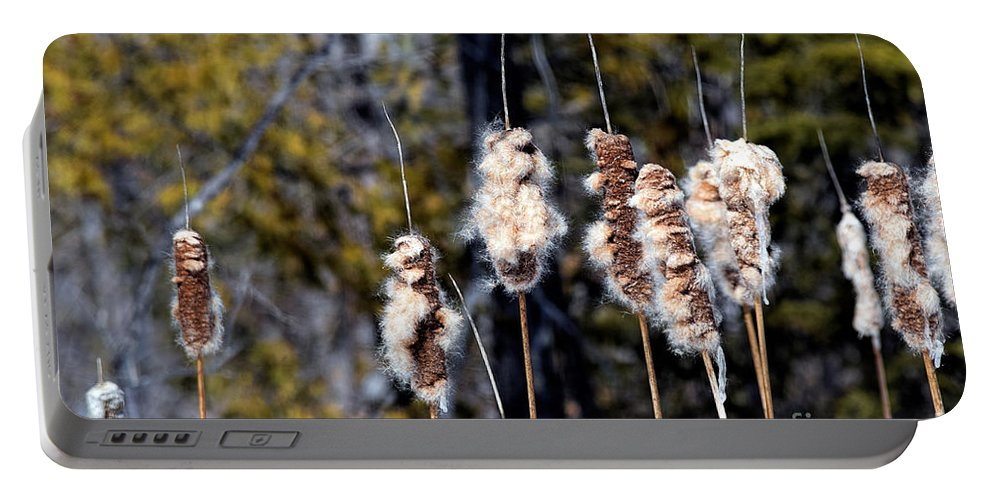 Cat Tails Portable Battery Charger featuring the photograph Cat O Eleven Tails by William Tasker