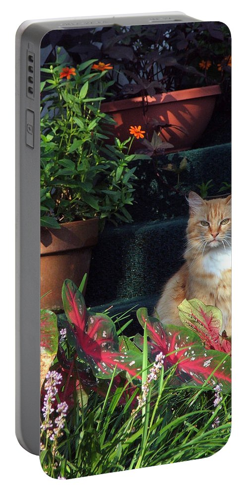 Cat Portable Battery Charger featuring the photograph Cat Postcard by Robert Meanor