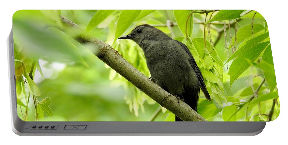 Bird Portable Battery Charger featuring the photograph Catbird by Betty-Anne McDonald
