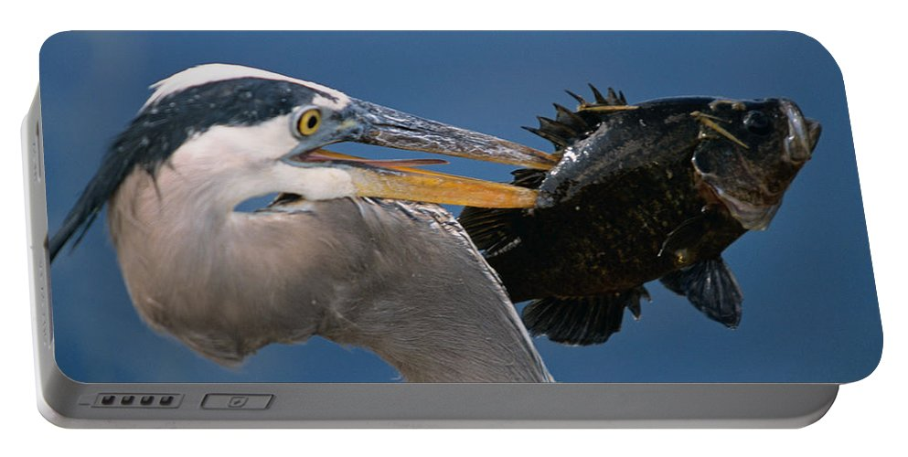 Great Blue Heron Portable Battery Charger featuring the photograph Catch Of The Day by John Harmon