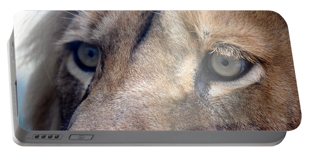 Lion Portable Battery Charger featuring the photograph Cats Eyes by Lisa Kane