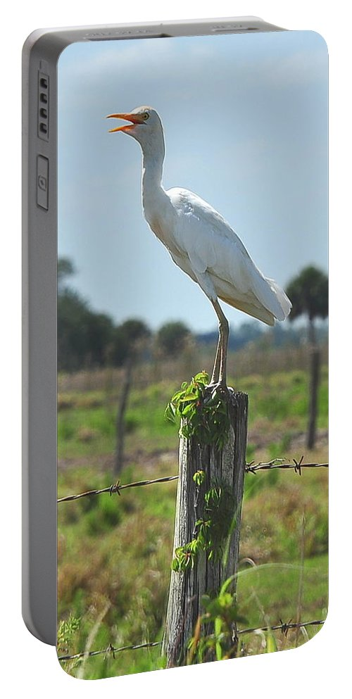 Cattle Egret Portable Battery Charger featuring the photograph Cattle Egret by Amy Spear