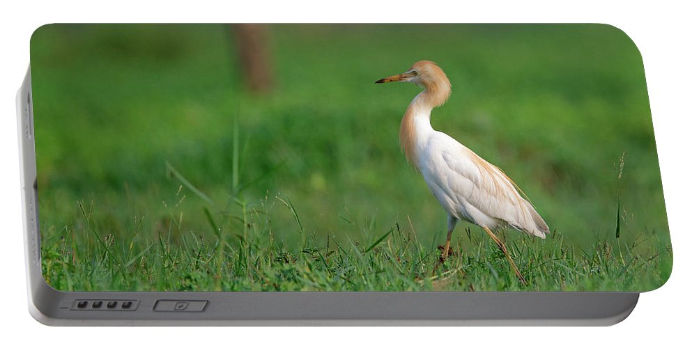 Cattle Egret Portable Battery Charger featuring the photograph Cattle Egret In Greenery by Abhishek S Padmanabhan