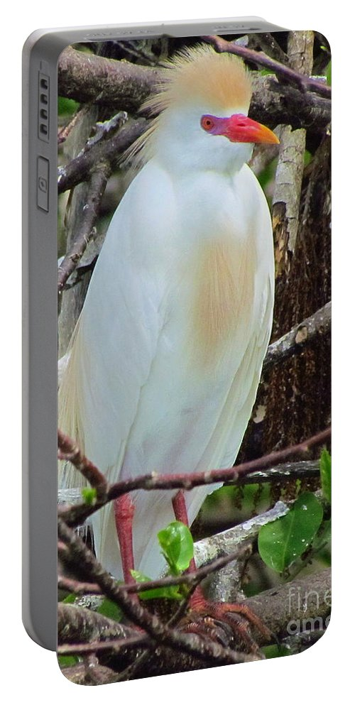 Bird Portable Battery Charger featuring the photograph Rainbow Bill Cattle Egret by Lori Pessin Lafargue
