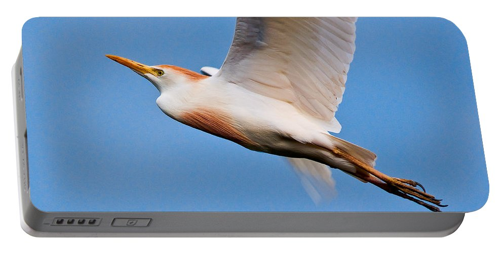 Art Portable Battery Charger featuring the photograph Cattle Egret On The Wing by Christopher Holmes
