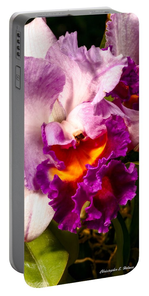 Flower Portable Battery Charger featuring the photograph Cattleya IIi by Christopher Holmes