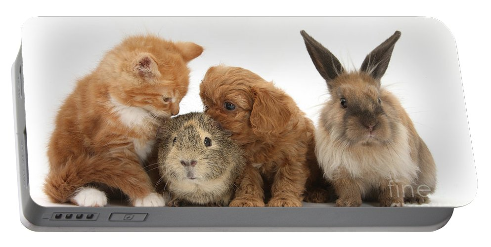 Nature Portable Battery Charger featuring the photograph Cavapoo Pup, Rabbit, Guinea Pig by Mark Taylor
