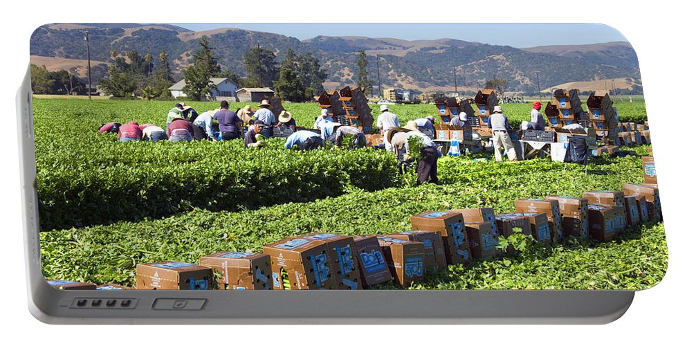 Celery Portable Battery Charger featuring the photograph Celery Harvest by Inga Spence