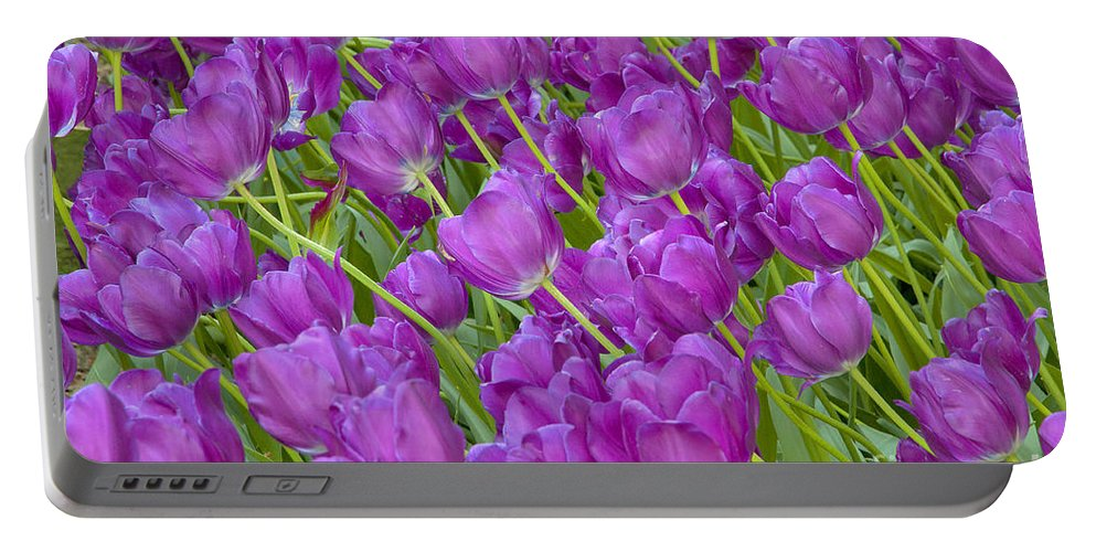 Tulips Portable Battery Charger featuring the photograph Central Park Spring-purple Tulips by Regina Geoghan