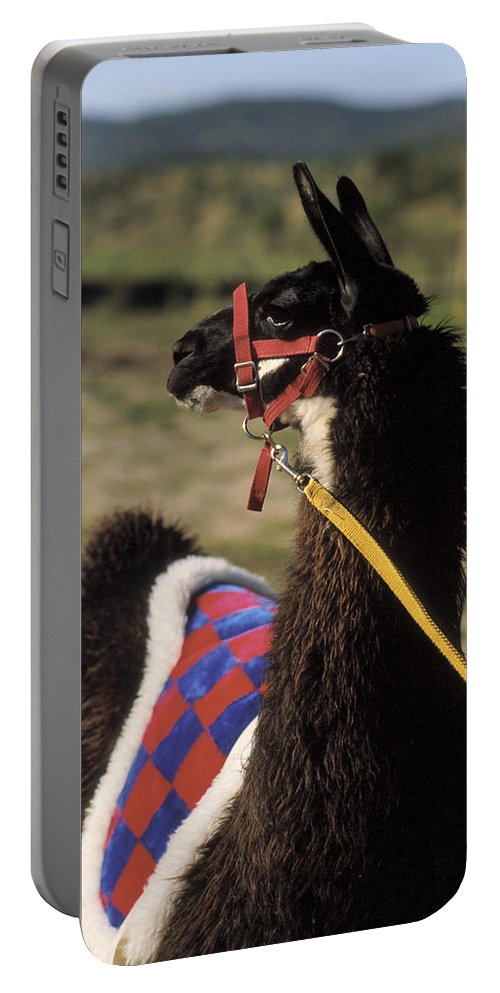 Llama Portable Battery Charger featuring the photograph Chaco by Jerry McElroy
