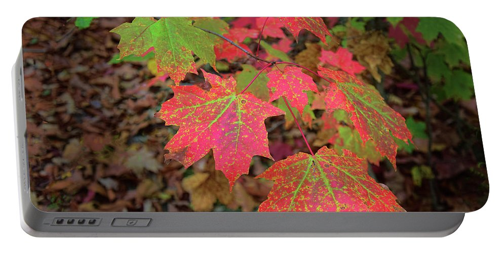 Leaves Portable Battery Charger featuring the photograph Changing Colors by Reese Lewis