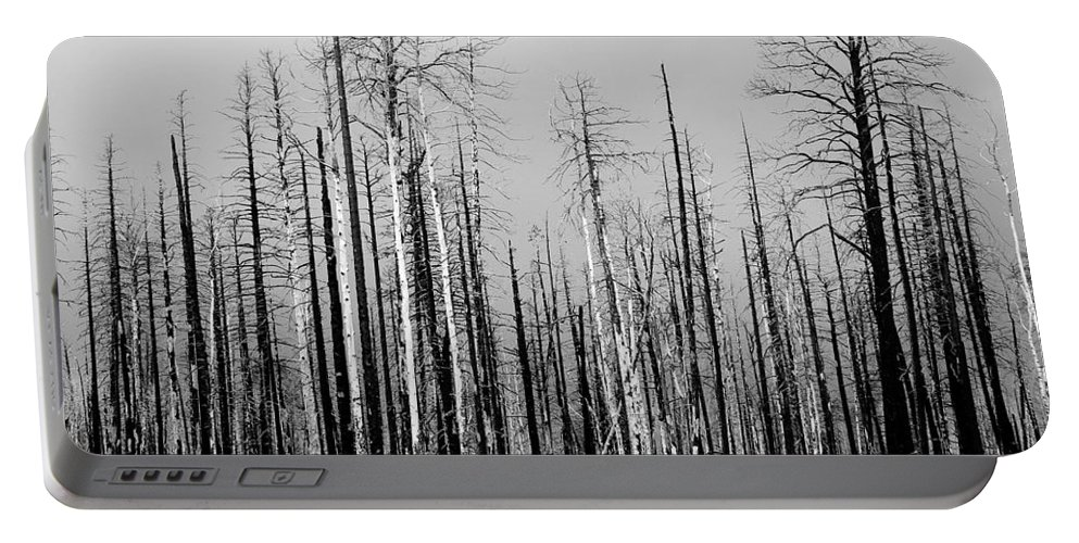 Charred Portable Battery Charger featuring the photograph Charred Trees by James BO Insogna
