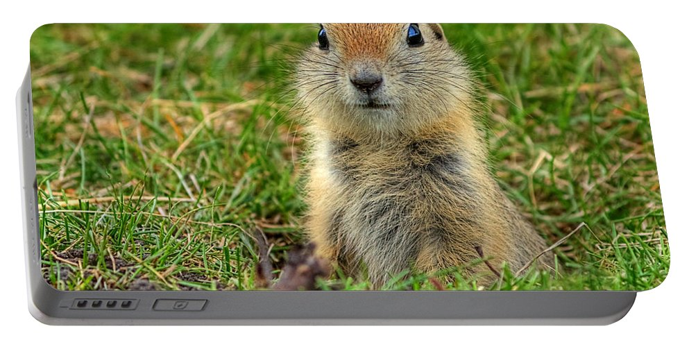 Inglewood Bird Sanctuary Portable Battery Charger featuring the photograph Check Out My Good Side by James Anderson