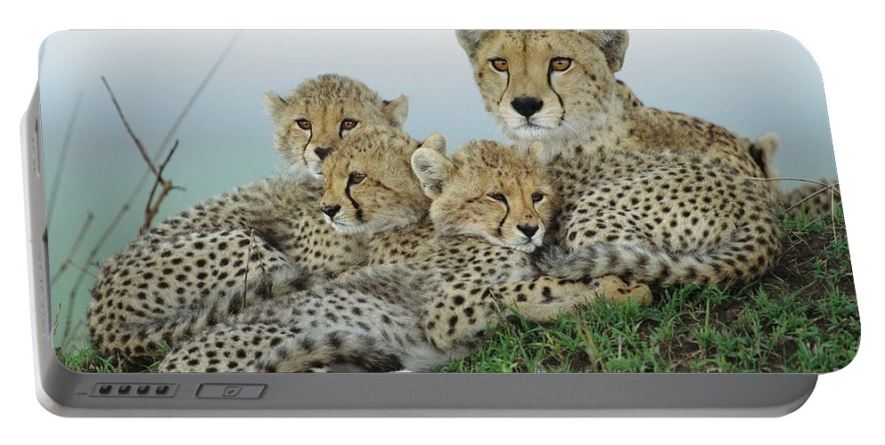 00345011 Portable Battery Charger featuring the photograph Cheetah And Her Cubs by Yva Momatiuk John Eastcott