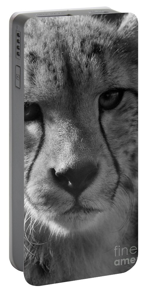 Cheetah Portable Battery Charger featuring the photograph Cheetah Black And White by Karen Adams