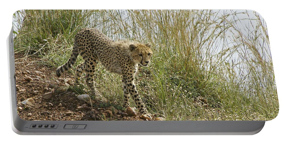 Africa Portable Battery Charger featuring the photograph Cheetah Exploration by Michele Burgess