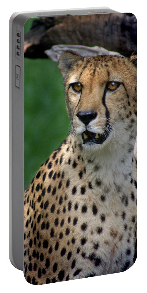Cheeta Portable Battery Charger featuring the photograph Cheetah by Heather Coen