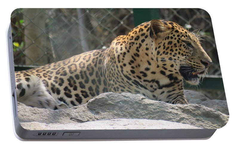 Leopard Portable Battery Charger featuring the photograph Cheetah by Utpal Datta
