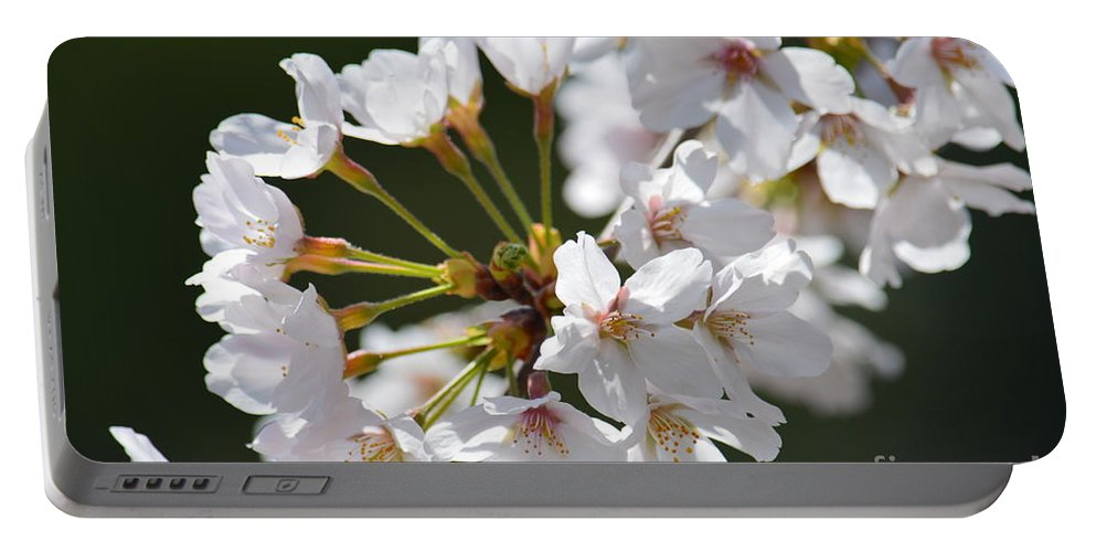 Cherry Blossom Cluster Portable Battery Charger featuring the photograph Cherry Blossom Cluster by Maria Urso