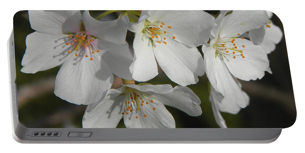 Cherry Blossoms Portable Battery Charger featuring the photograph Cherry Blossoms II by Sandi OReilly