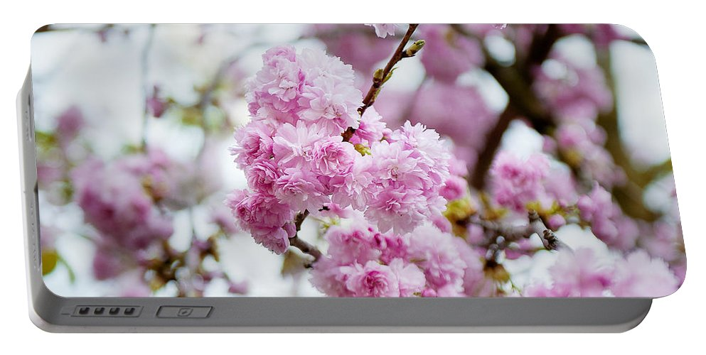 Angsanaseeds Portable Battery Charger featuring the photograph Cherry Blossoms by Ivy Ho
