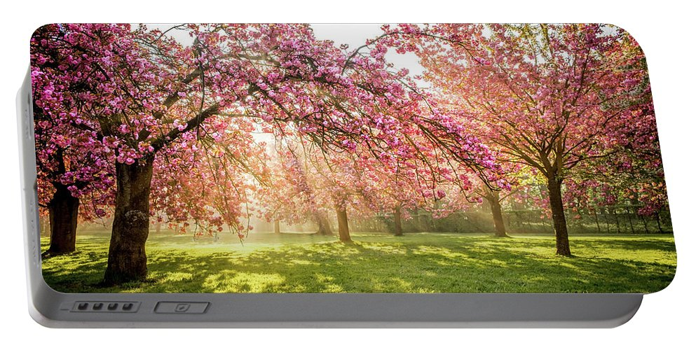 Cherry Portable Battery Charger featuring the photograph Cherry Flowers Garden Illuminated With Sunrise Beams by Antoine 2K
