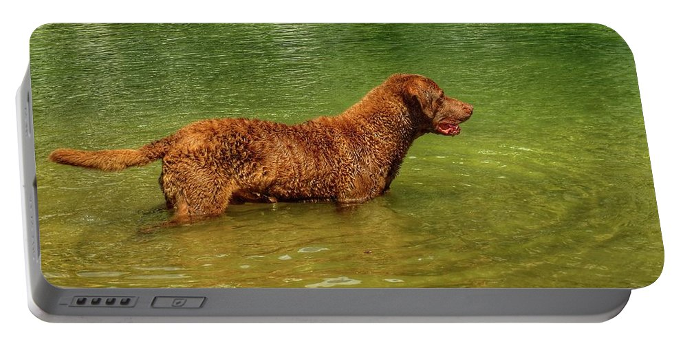 Chesapeake Bay Retriever In Water Portable Battery Charger featuring the photograph Chesapeake Bay Retriever by John Myers