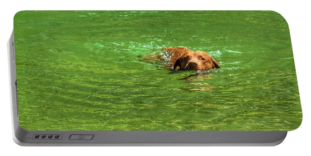 Chesapeake Bay Retriever Portable Battery Charger featuring the photograph Chesapeake Bay Retriever Swimming by John Myers
