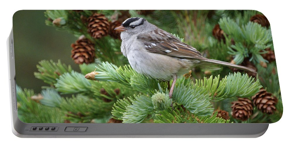 Chickadee Portable Battery Charger featuring the photograph Chickadee by Heather Coen