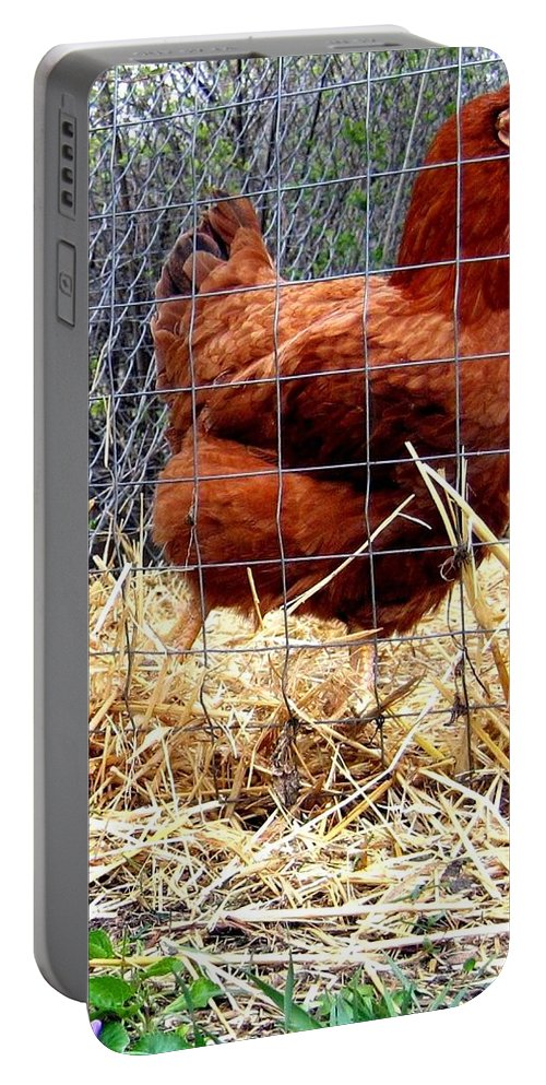 Chicken Portable Battery Charger featuring the photograph Chicken In The Straw by Will Borden