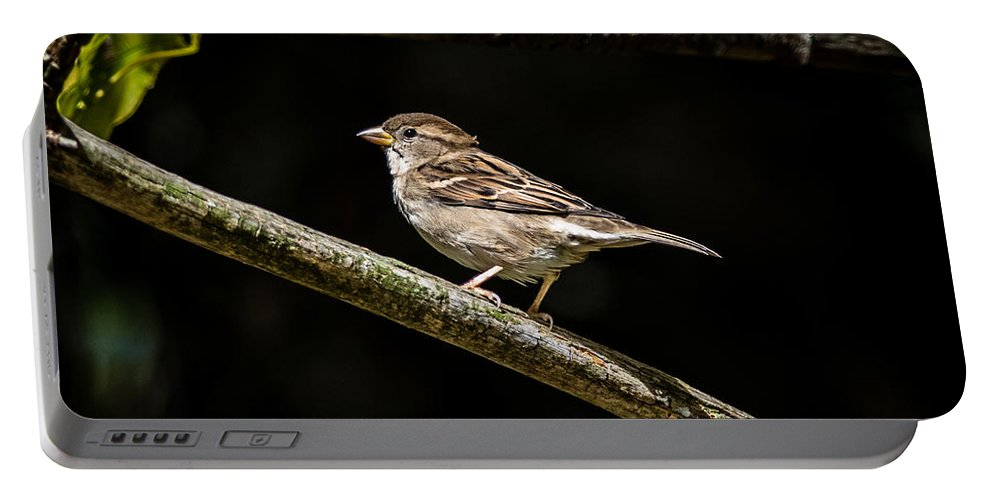 Sparrow Portable Battery Charger featuring the photograph Chipping Sparrow by Bob Orsillo
