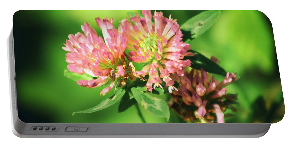 Flowers Portable Battery Charger featuring the photograph Chives by Frances Lewis
