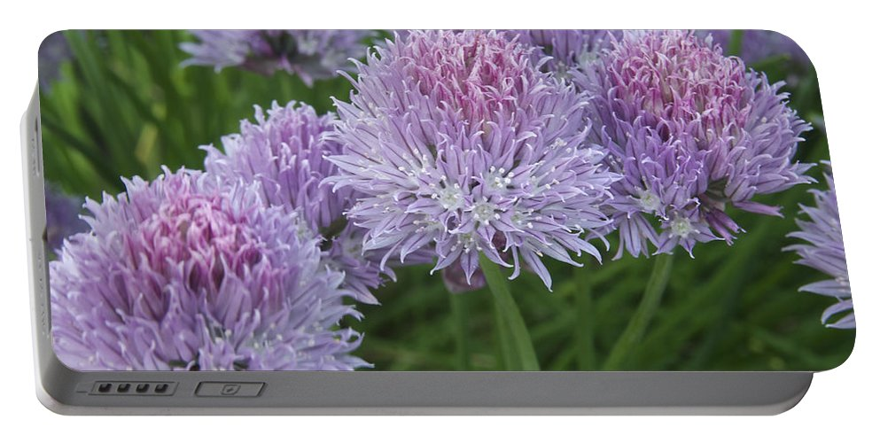 Allium Portable Battery Charger featuring the photograph Chives by Michael Peychich
