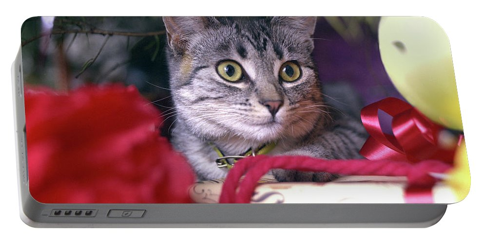 Animals Portable Battery Charger featuring the photograph Christmas Cat by Robert Chaponot