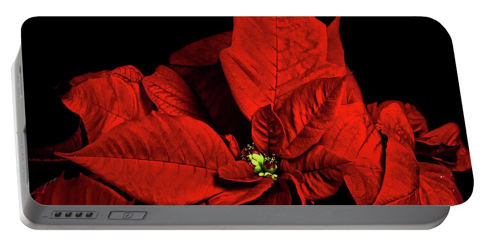 Pointsettia Portable Battery Charger featuring the photograph Christmas Fire by Christopher Holmes