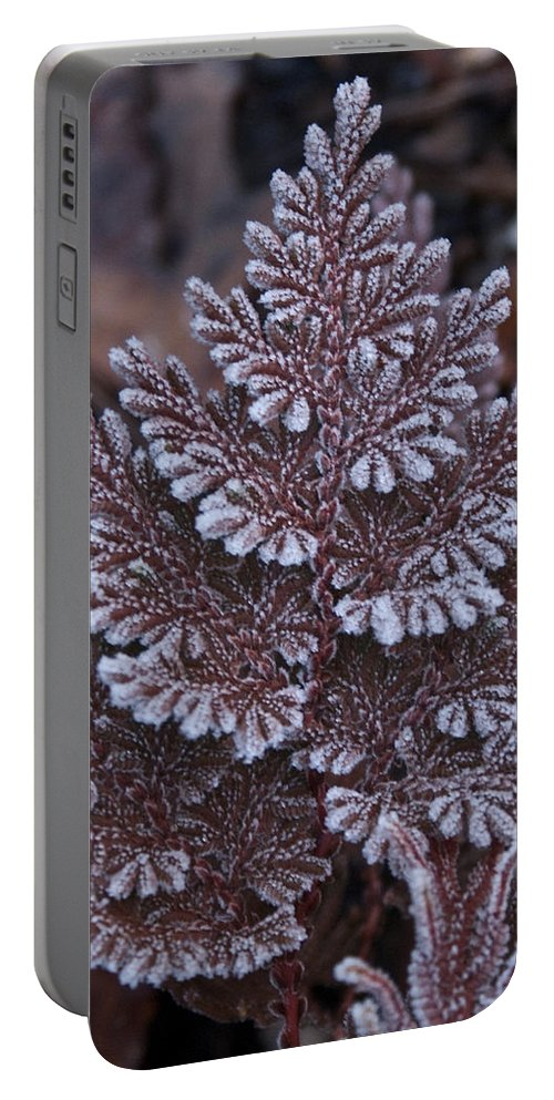 Frosty Portable Battery Charger featuring the photograph Christmas Frosty Pattern by Douglas Barnett