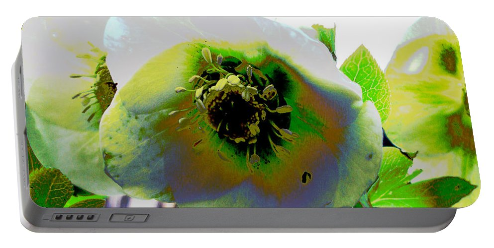 Flora Portable Battery Charger featuring the photograph Christmas Rose by Susan Baker