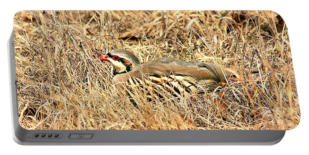Nature Portable Battery Charger featuring the photograph Chuckar Bird Hiding In Grass by Sheila Brown